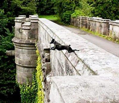 Dog Suicide Bridge, Mysterious Overtoun Bridge, Scotland, Hindi, Story, History, Kahani, Itihas, Rahasyamayi,