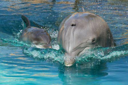 Nasceu golfinho
