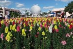epcot-international-flower-and-garden-festival