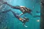Sereias aquario sao paulo