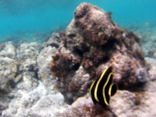 Snorlerkeling
