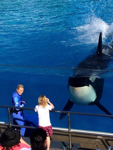 SeaWorld San Diego golfinhos