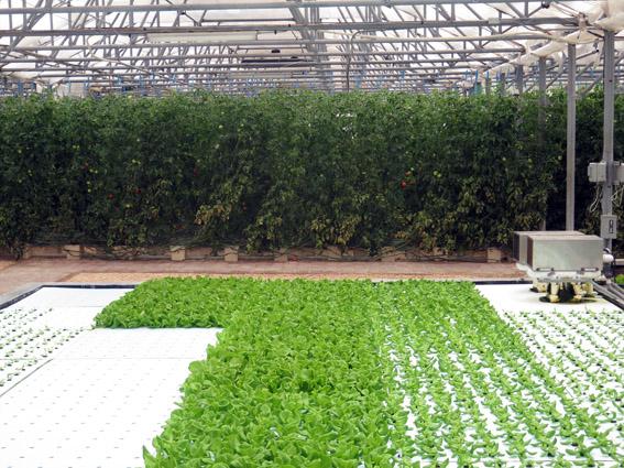CuisinArt Resort Golf & SPA hidroponic farm