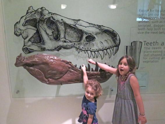 As Laranjinhas em NY - Museu de História Natural
