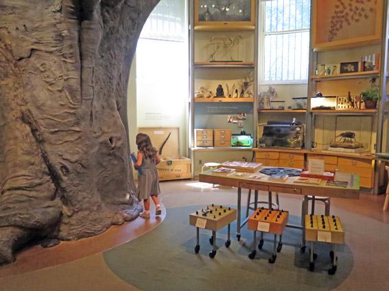 As Laranjinhas em NY - arvore de sala Museu de História Natural
