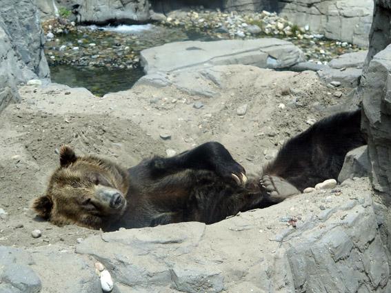 Central Park Zoo Urso