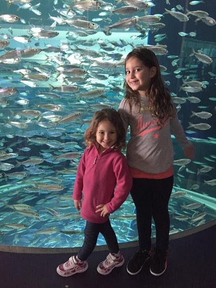 as laraninhas mundo afora no aquario de Toronto