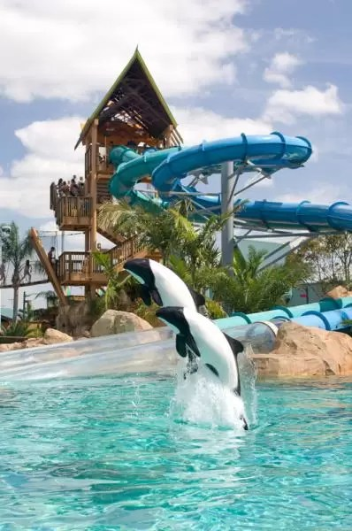Dolphin Plunge Aquatica Orlando