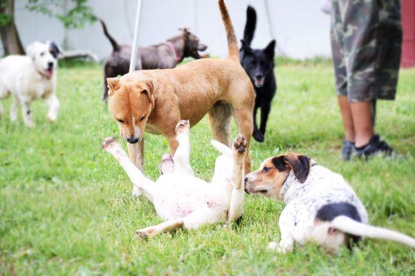 Cachorros brincando | Foto:Pets Alive