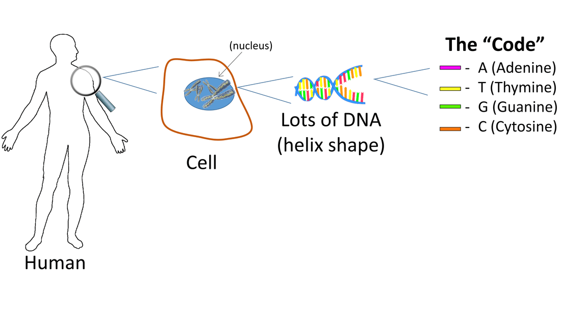 Cells & DNA: Simple Science Lesson + Instruction on Code