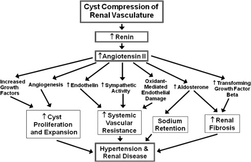 References in Hypertension and Autosomal Dominant