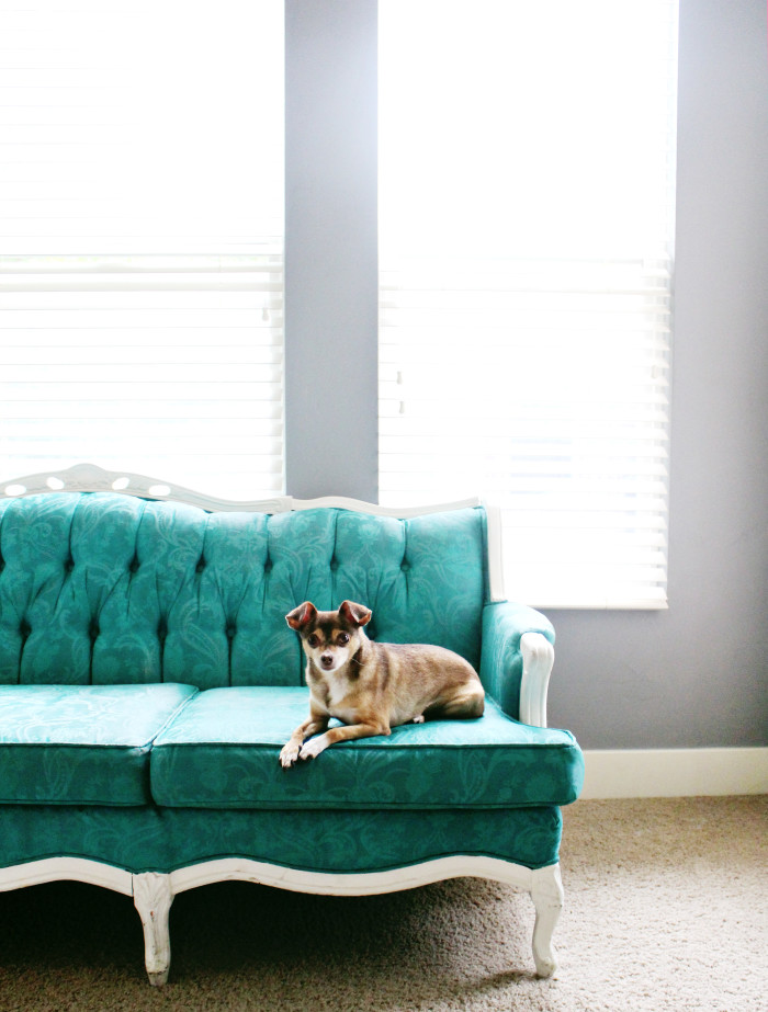 gray walls and turquoise painted couch (and a cute puppy!) | A Joyful Riot