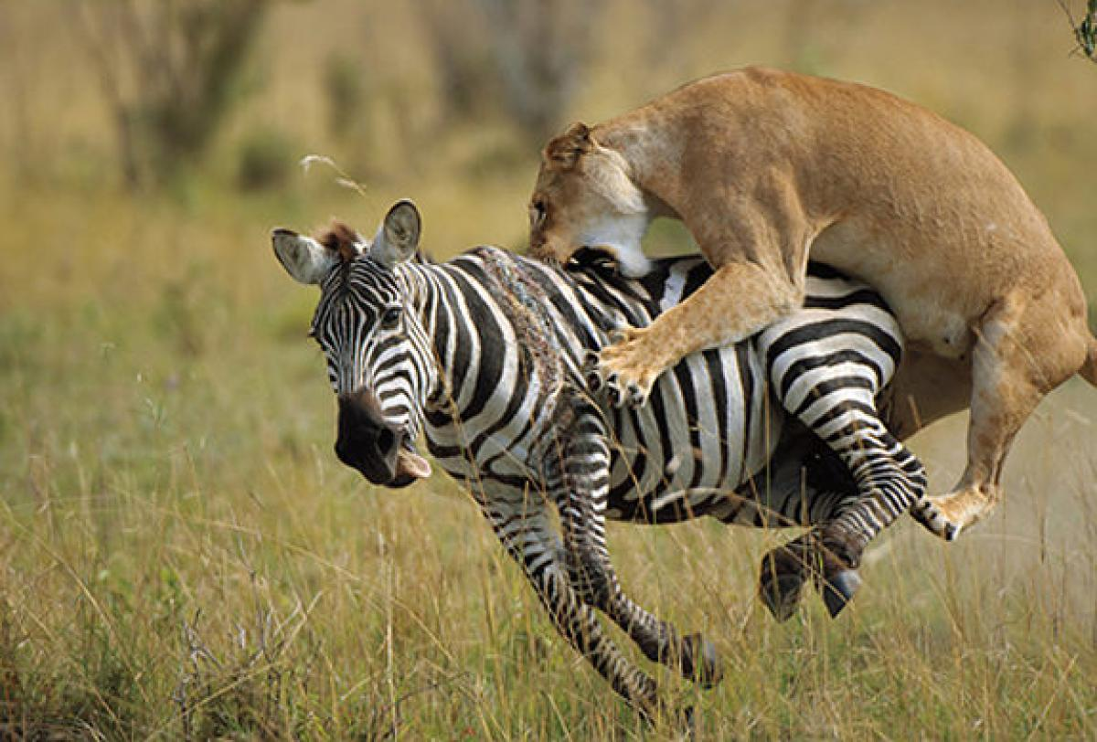 3 Day Masai Mara Game Reserve Air Safari From Nairobi Kenya
