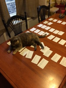cat on a dining table