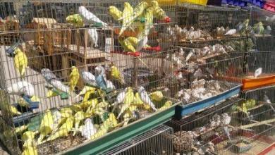 صورة سوق الغزل مابين رحاب الماضي ومعوقات الحاضر