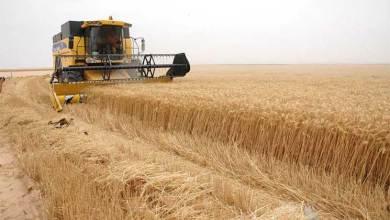 صورة الزراعة النيابية : تحويل 50 بالمئة من مستحقات الفلاحين الى التجارة