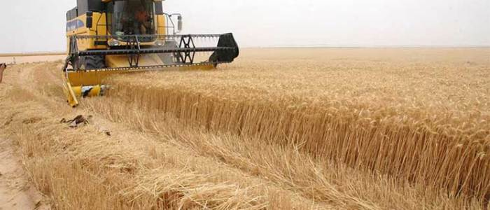 الديوانية تنجح بتخطي معدلات انتاج الحنطة السابقة و لجنة سباعية لدعم عملية التسويق