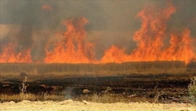 صورة الزراعة تكشف مساحة الحقول المتضررة وتكشف سبب الحرائق