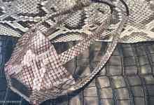 صورة شركة تثير الجدل بصناعة كمامات من جلود الثعابين
