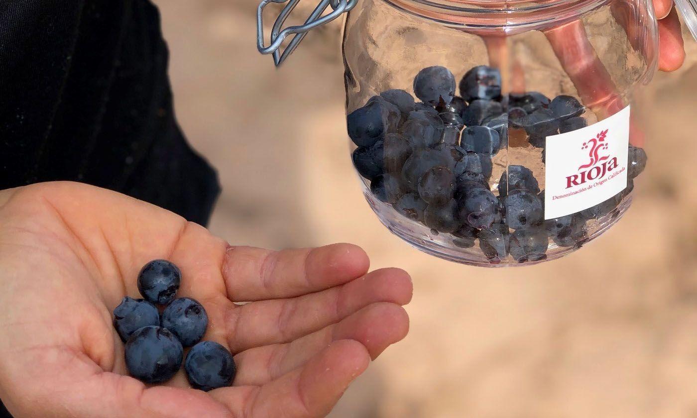 La vendimia en Rioja avanza notablemente