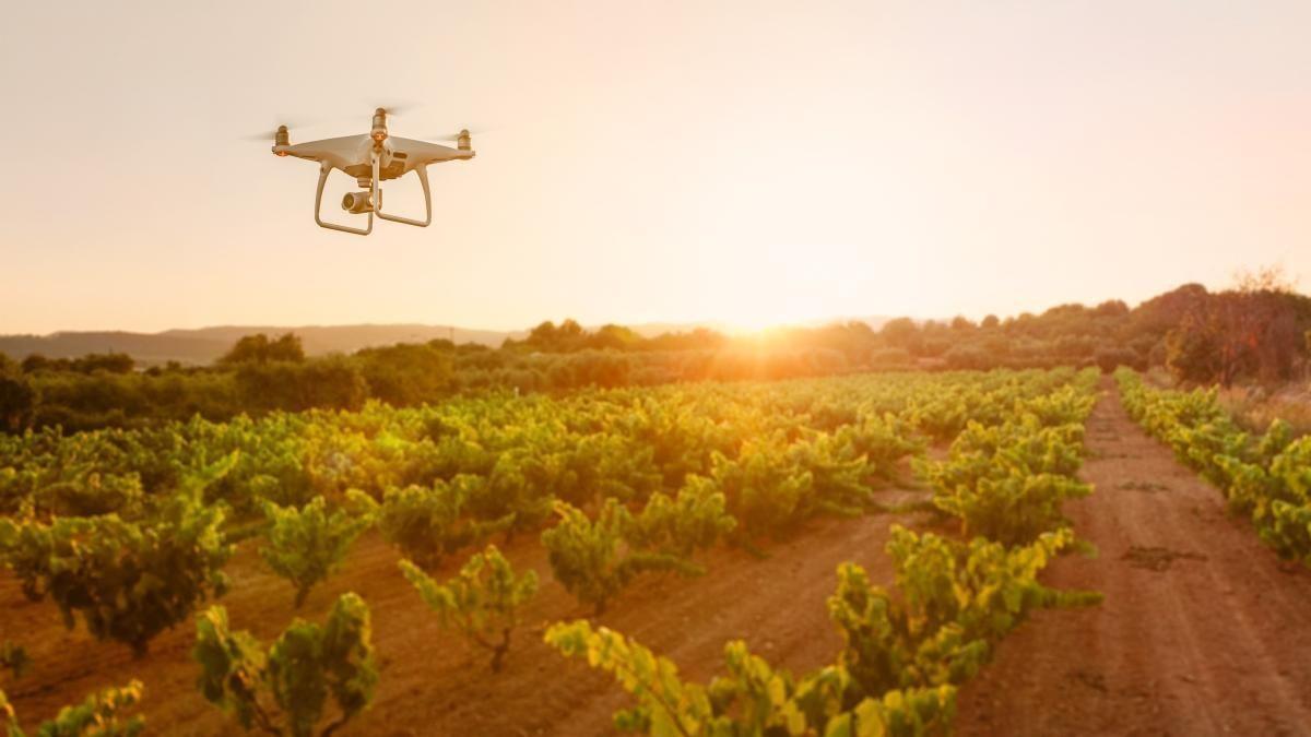 Atos lleva la IA mediante drones y satélites a bodegas de Ribera del Duero | AkataVino Magazine
