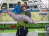 ヘラツノザメ