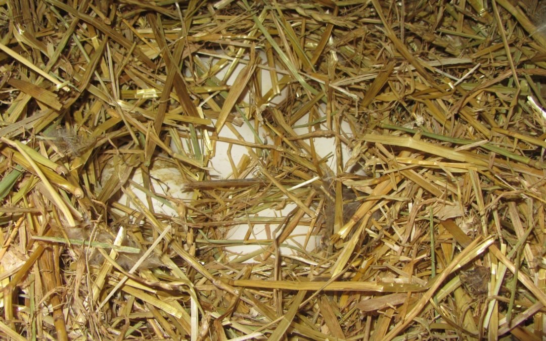 Goose nest!
