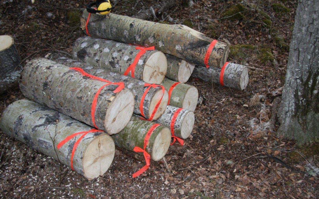 Mushroom Log Experiments
