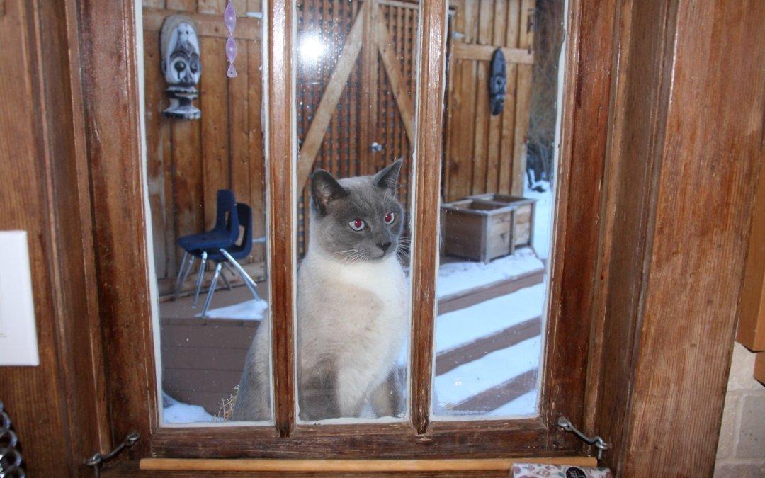 Surprise! Stanley thinks it's summer…