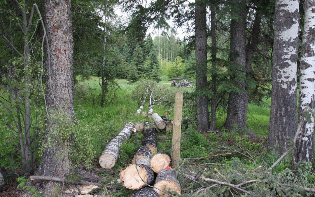 A few less trees…