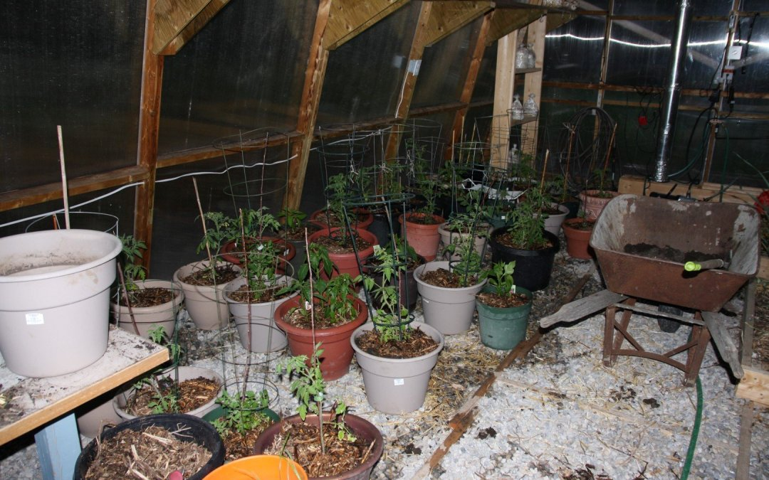 Progress in the greenhouse
