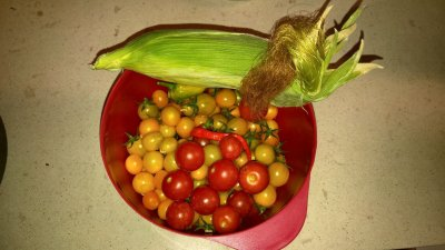 Tomatoes and corn