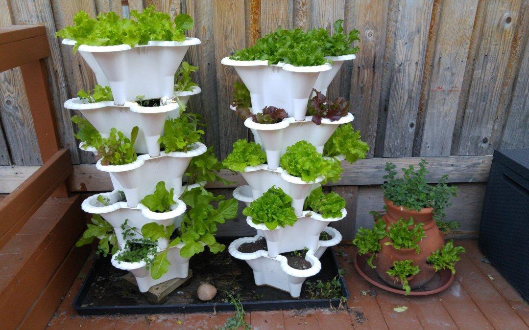 Lettuce tower