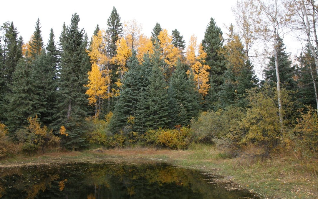 Fall colours