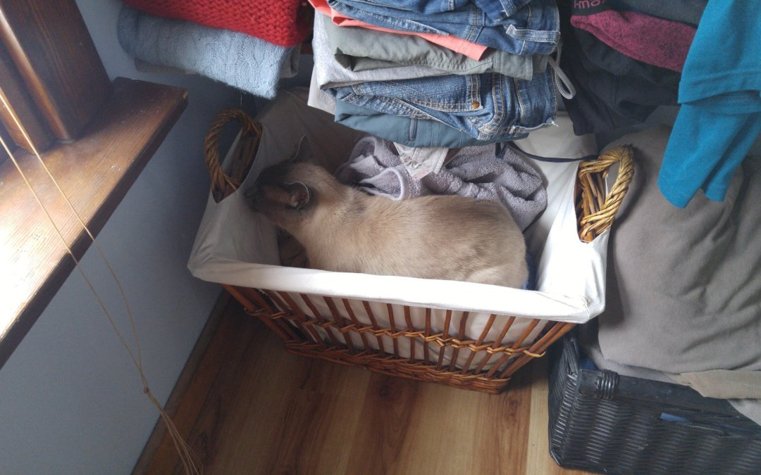 Husband – why are the freshly laundered towels full of cat hair?