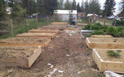 Main kitchen garden planted