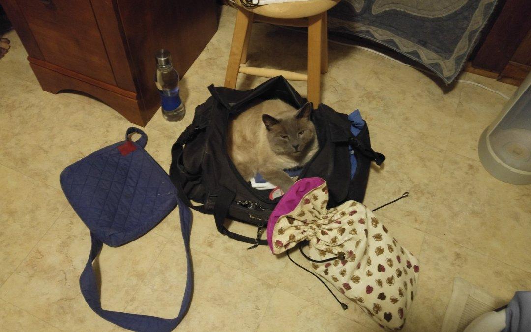 Funny cat photo – Atticus at it again!