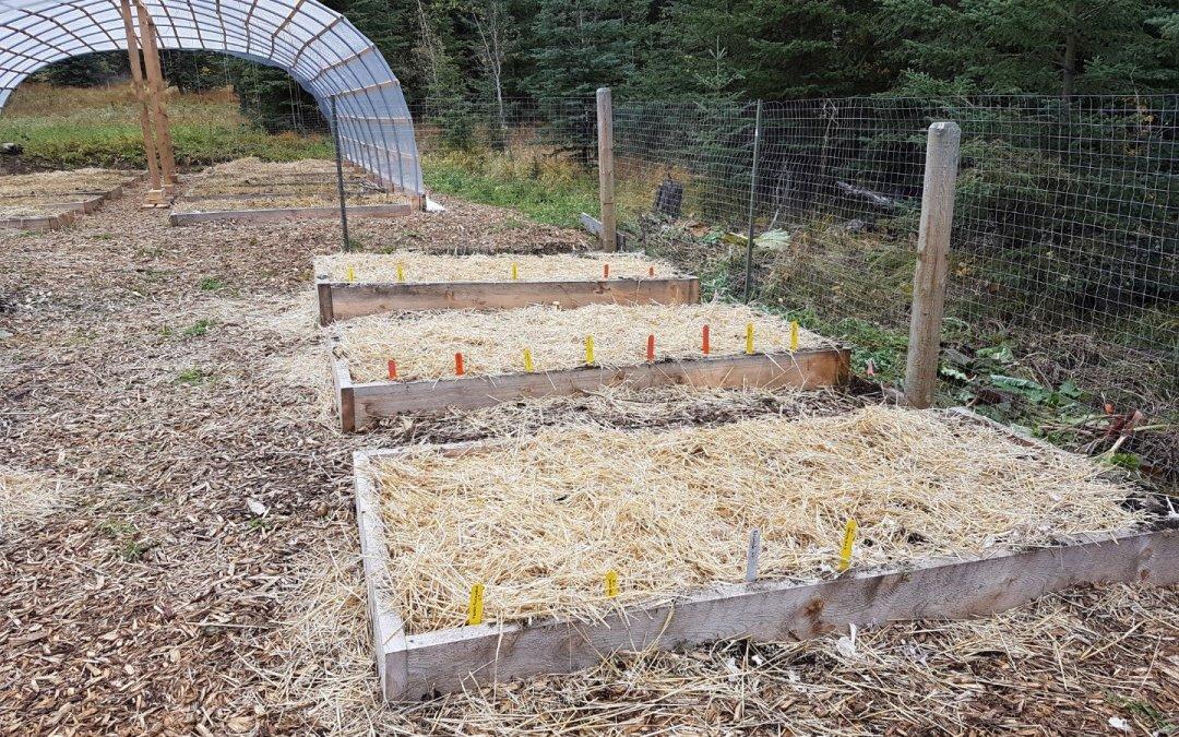 Garlic planted!