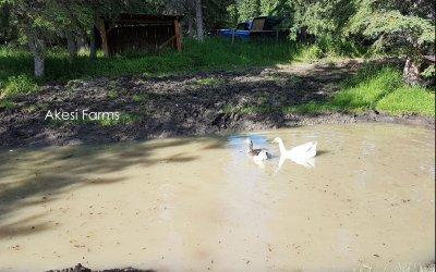 New Goose Pond