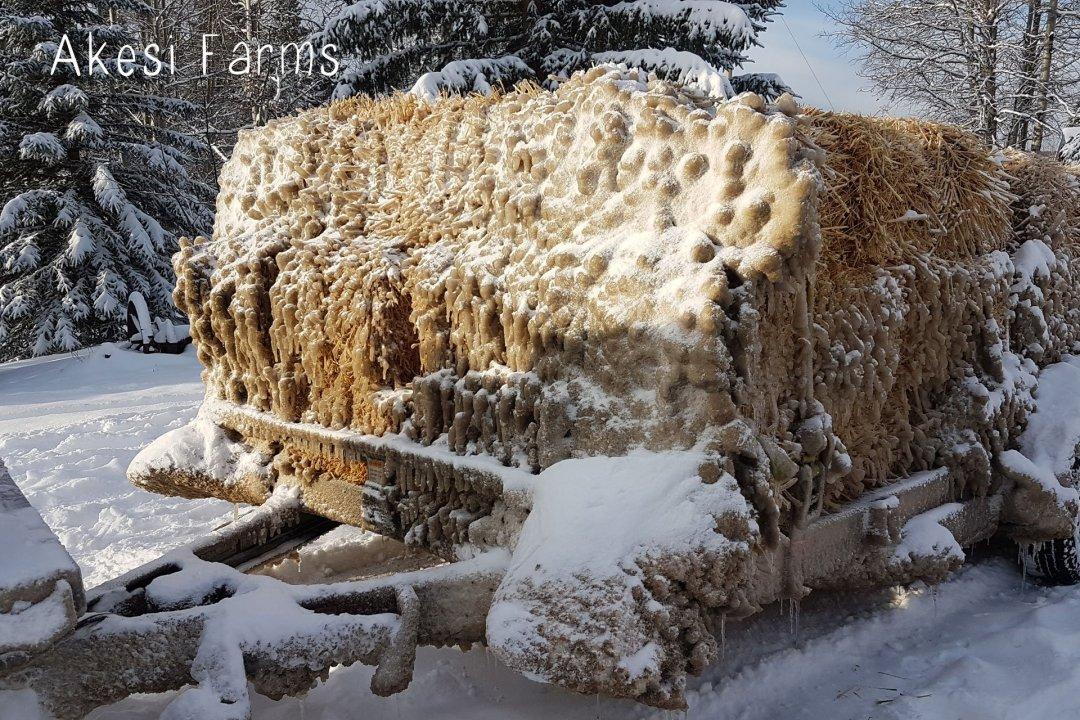 Wintery Straw