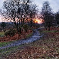 Setting Winter Sunset at Appleslade, New Forest - Portrait