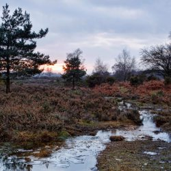 Winter Ice at Appleslade, New Forest.