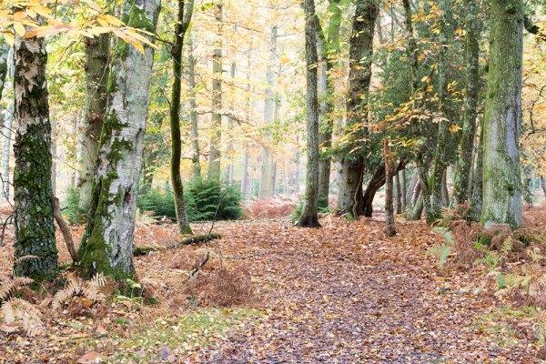 Anderwood Autumn 3 (Original)