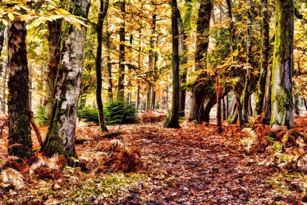 Anderwood Autumn 3 (Restyle & Detail & Simplify & Adjust)