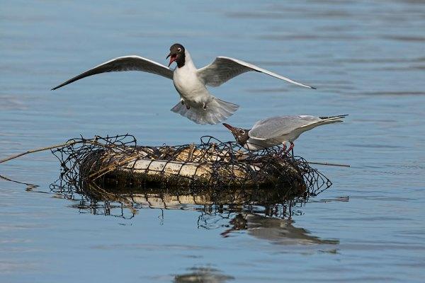 Duck!...No Seagull!