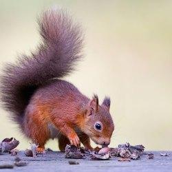 Ooh! Nuts!