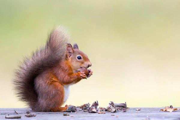 Squirrel Picnic
