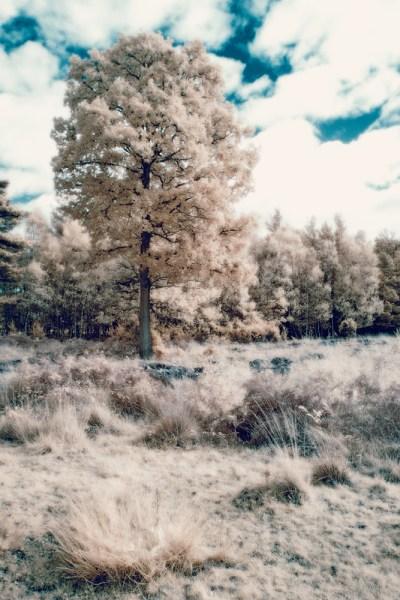 Wistful Tree