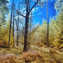 Bright Wood