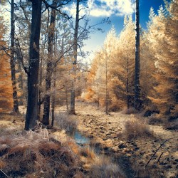 Autumnal Copse